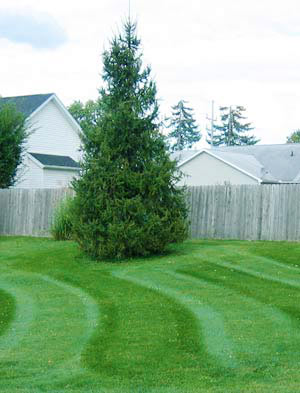 Canton Lawn Mowing